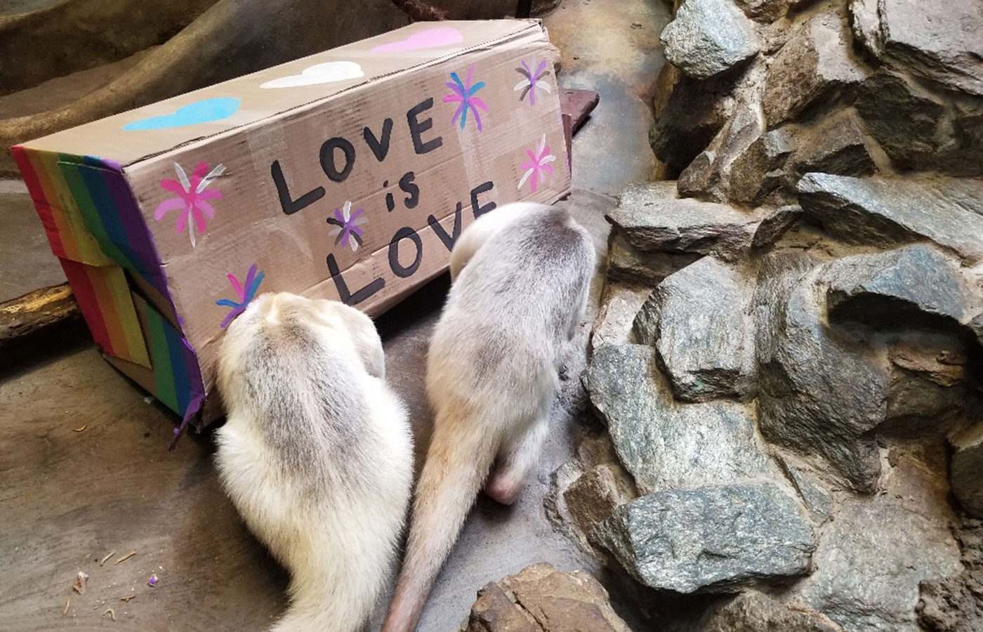 "Two tamanduas investigate a box painted with the words ""love is love"" for International Family Equality Day at the Zoo"