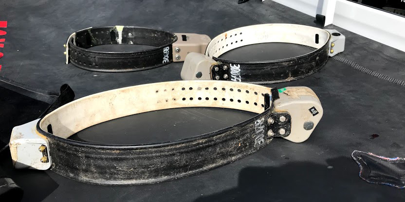 Three GPS tracking collars for tapirs set on a table