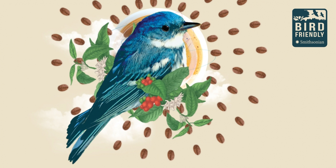 A stylized graphic of a blue bird perched on the branch of a coffee plant. A mug of coffee is behind the bird, and roasted coffee beans are arranged in a circular, sunburst pattern around the bird. The Bird Friendly logo is in the top right corner.