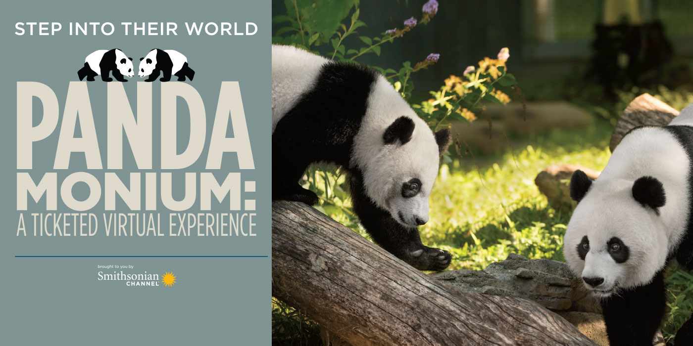 "a photo giant panda cub and its mother face each other on the right. the text ""PANDAMONIUM: A Ticketed Virtual Experience"" brought to you by the Smithsonian Channel on the left"