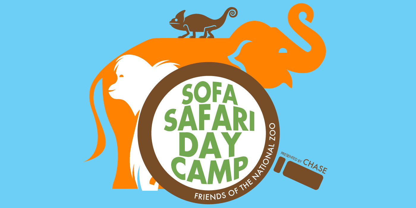 illustration of an elephant, gorilla, and chameleon with a magnifying glass and the words sofa safari day camp friends of the national zoo