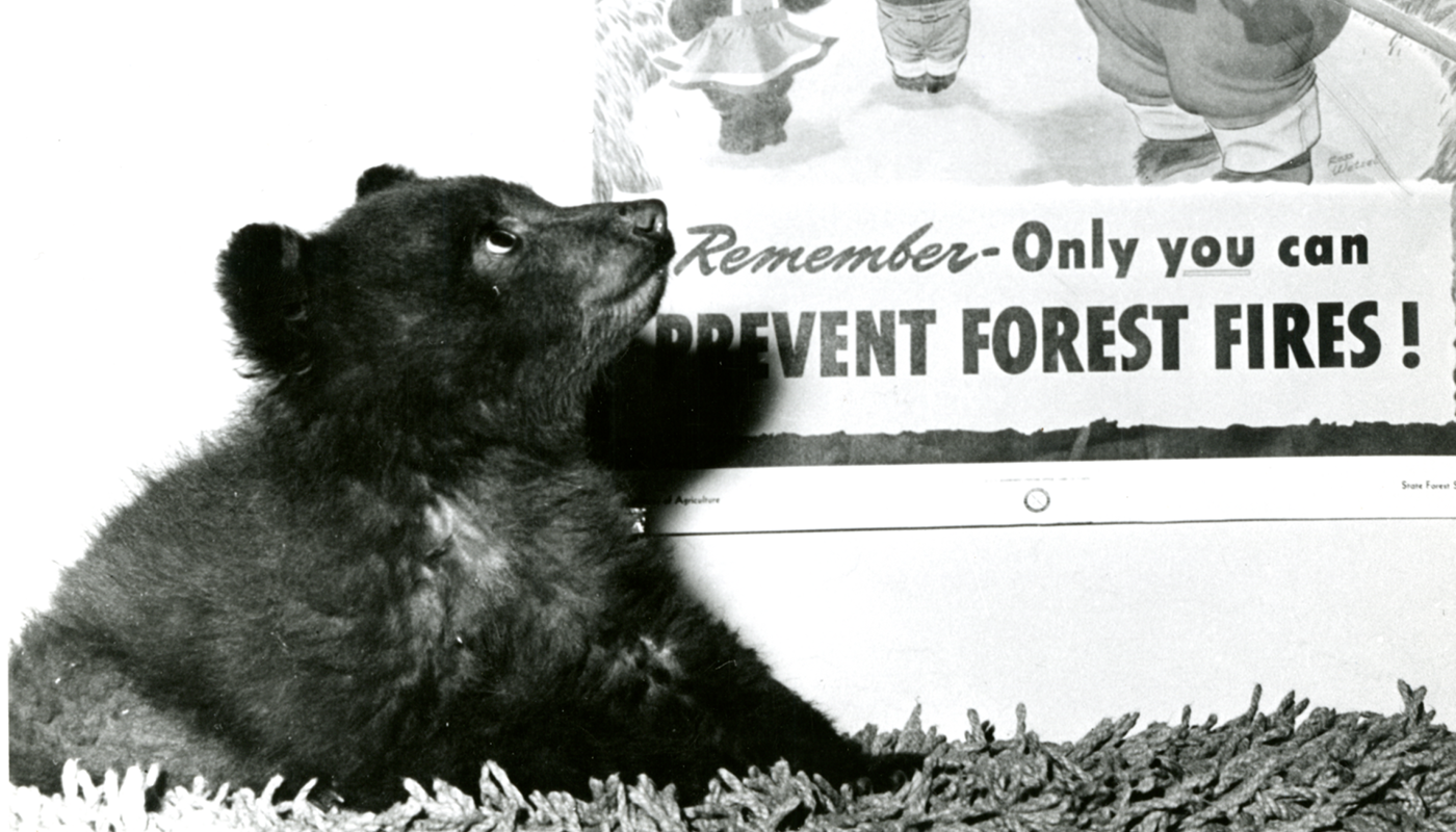 One Cool Thing: 5 Facts You Didn't Know About Smokey Bear