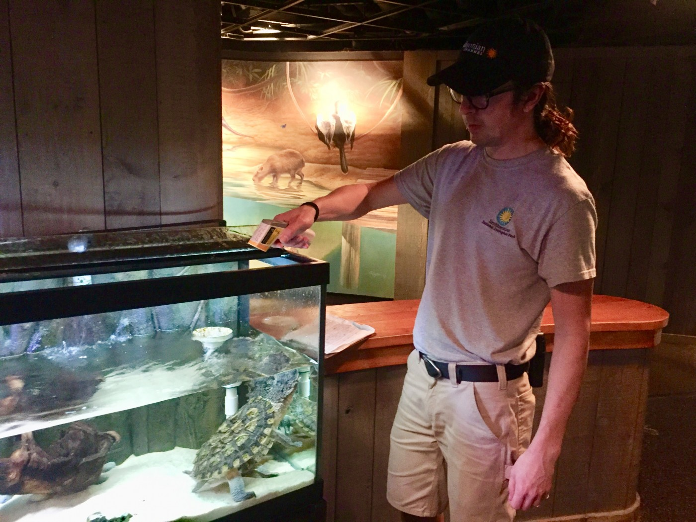 A zookeeper feeding a turtle