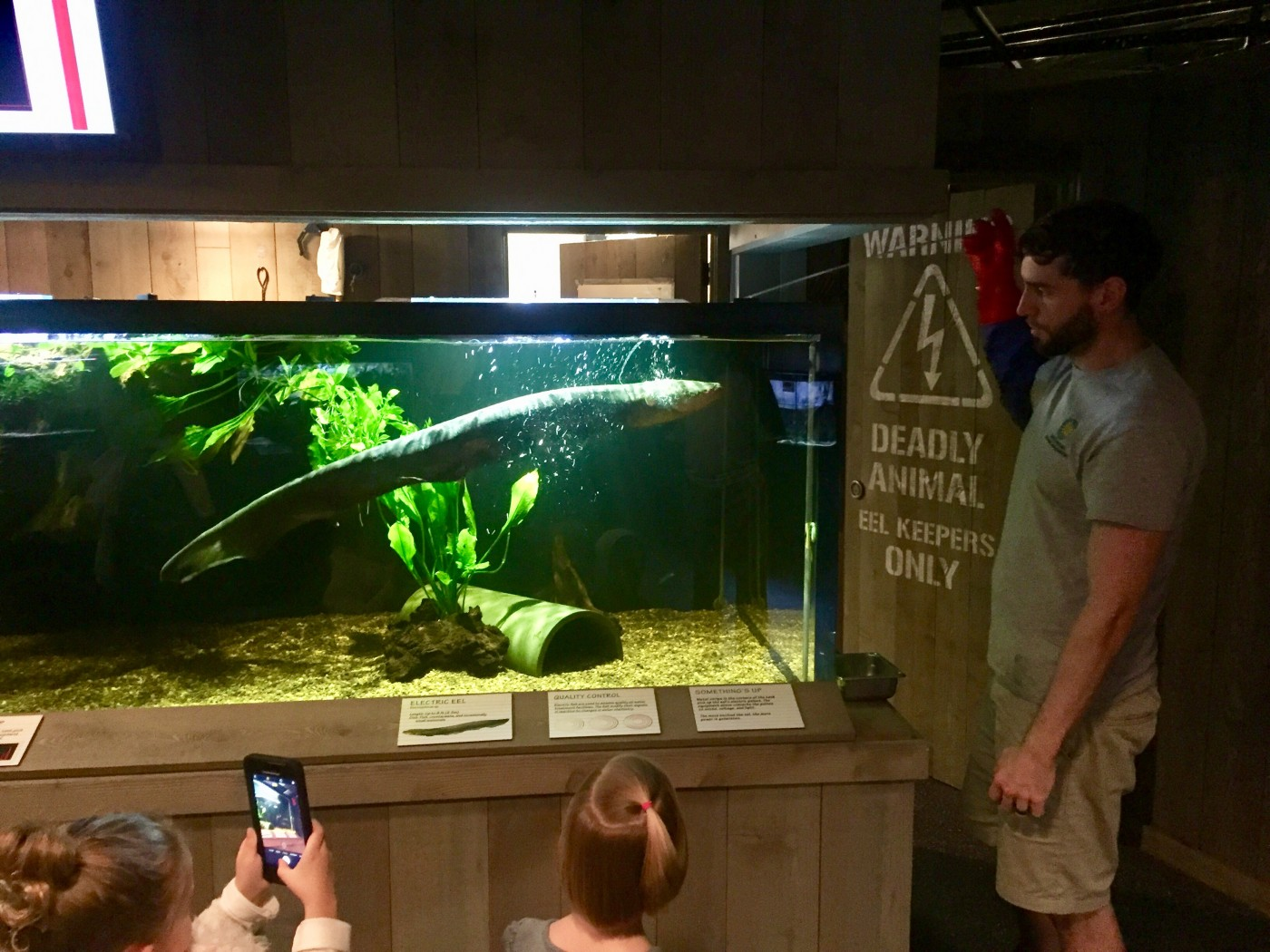 A zookeeper gives a public demonstration with the electric eel