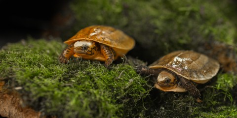 two turtles on moss