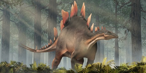 artist rendition of a stegosaurus