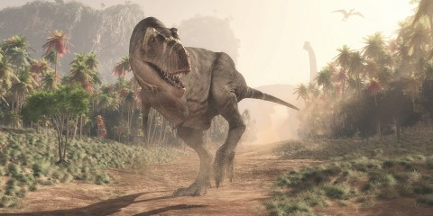 artist rendition of a Tyrannosaurus rex