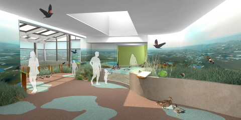 Experience Migration exhibit rendering of the Waterfowl Aviary: Prairie Potholes, featuring a pathway surrounded by grass/birds