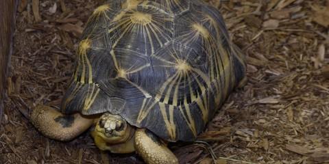 Tortoise on the ground