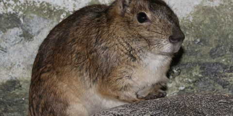 Side view of a brown furry animal