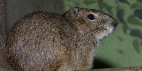 Profile of a small furry animal