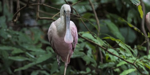 Long-necked, long-legged pink bird
