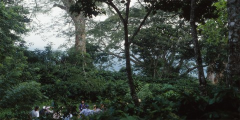 A group of people working on a shade coffee farm in Nicaragua