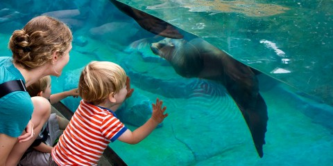 a boy and a woman touch the glass of a tank as a seal swims by