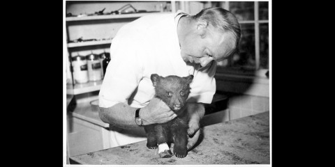 a small bear cub is examined by a veterinarian in a white coat