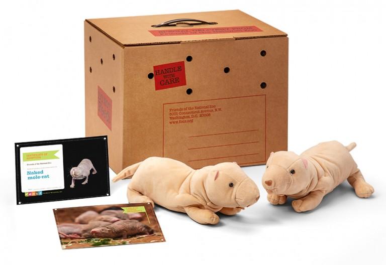 Hots Information On Naked Mole Rat Gif
