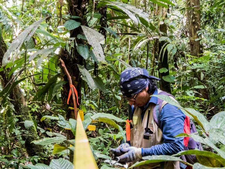 A researcher sets up tools for a wildlife survey in the Peruvian Amazon