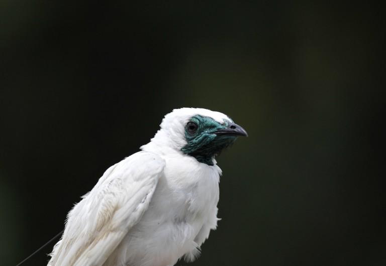a white bird against a black background