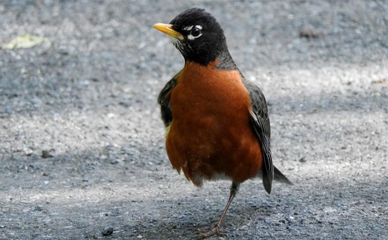 bird standing on road on one leg