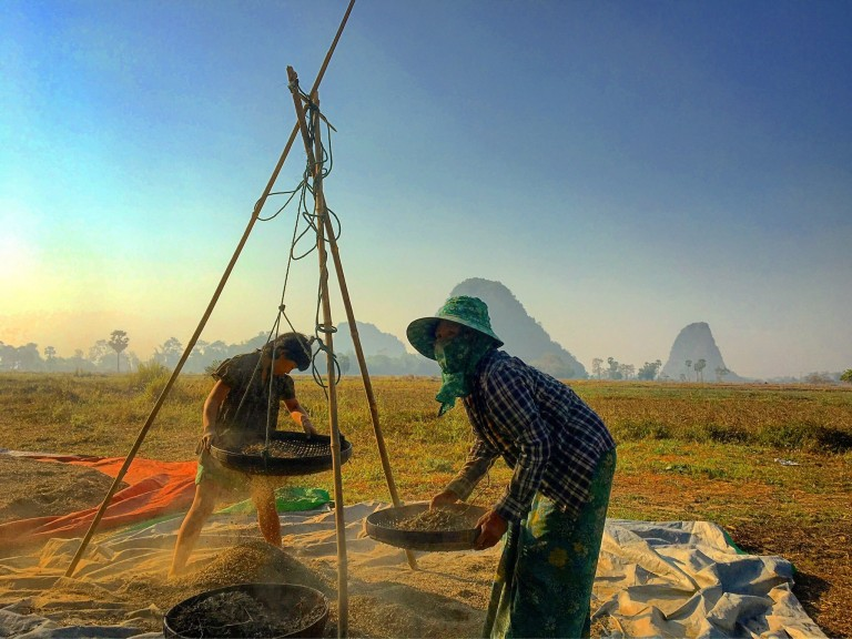 Two people in Myanmar dry and sift bat guano in a field