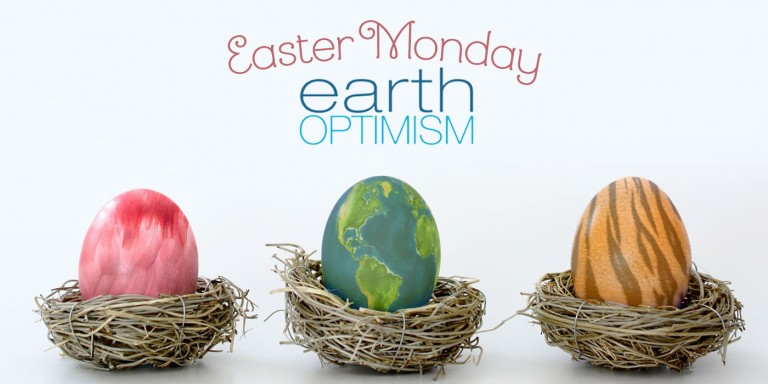 "Three eggs sit in individual dry-grass nests. One looks like feathers, the other like the earth and the third one looks like a tiger's stripes. The words ""Easter Monday and Earth Optimism"" are at the top."