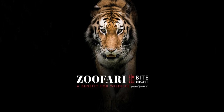 """A tiger in front of a black background with the text """"Zoofari: Bite Night. A benefit for wildlife sponsored by Geico"""""""