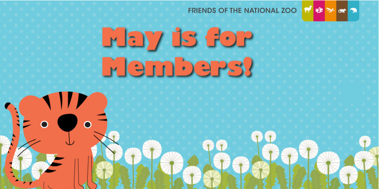 illustration of a tiger cub with flowers in the foreground and a light blue background with the text may is for members!