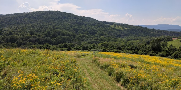 Virginia Working Landscapes at the Smithsonian Conservation Biology Institute's Racetrack Hill.