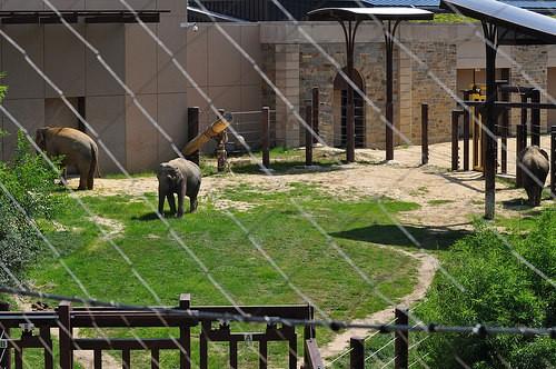 Public Debut of Asian Elephants Maharani