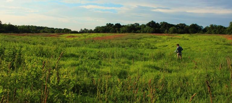 Virginia Working Landscape