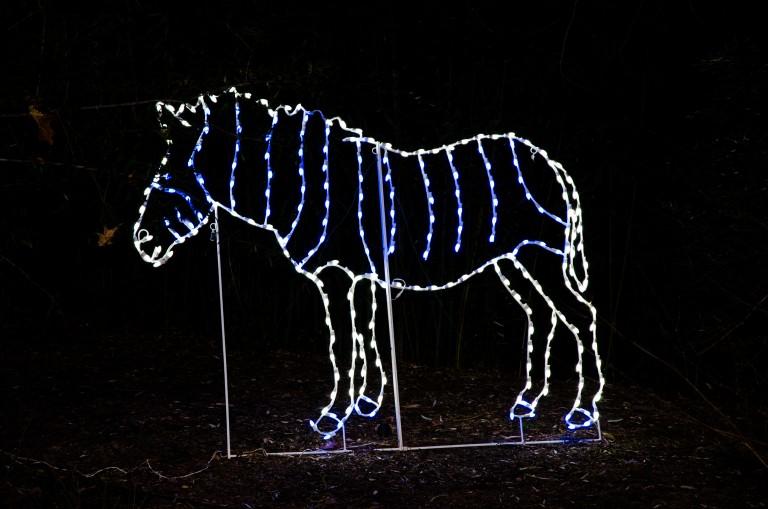 ZooLights Zebra Light Display
