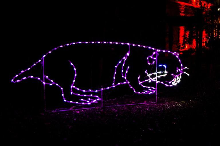 ZooLights Naked Mole Rat Light Display