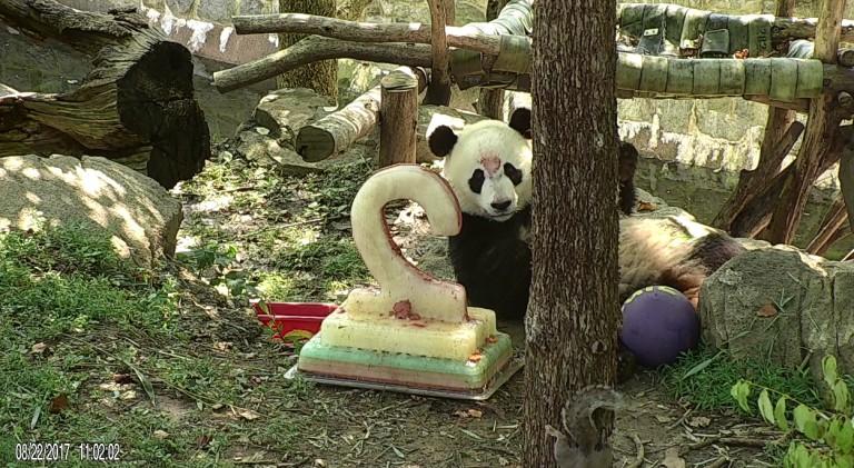 Bei Bei eating his birthday cake.