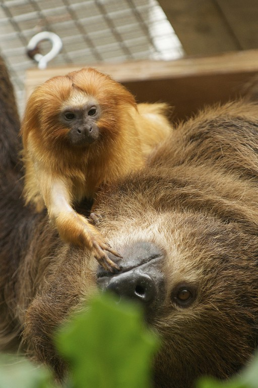 small monkey and sloth
