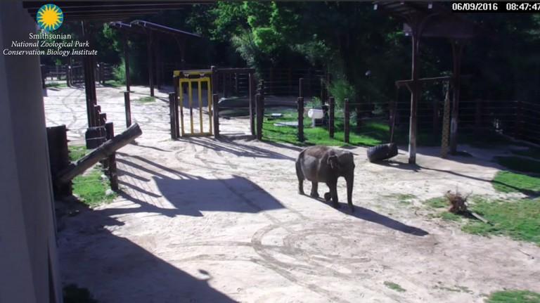 elephant in yard