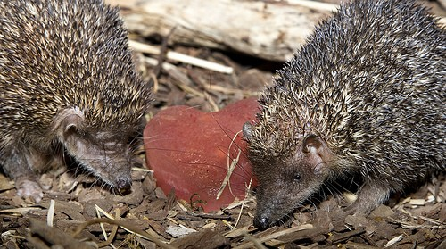 spiny critters
