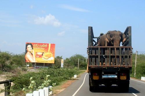 Relocating Elephants Fails to Decrease Human?ÑÐWildlife Conflict