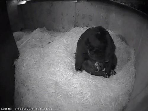bear cubs in den