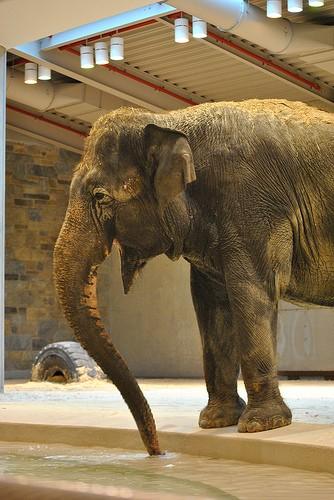 elephant inside