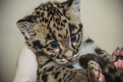 cub in the hand
