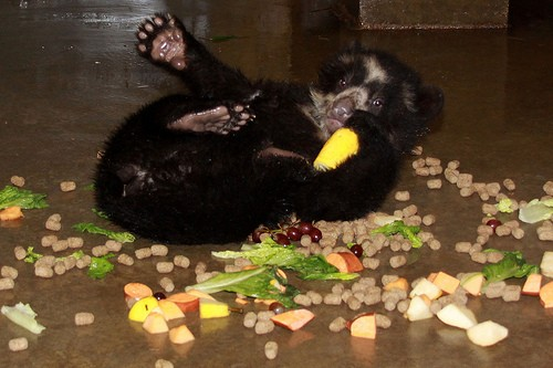 cubs on floor