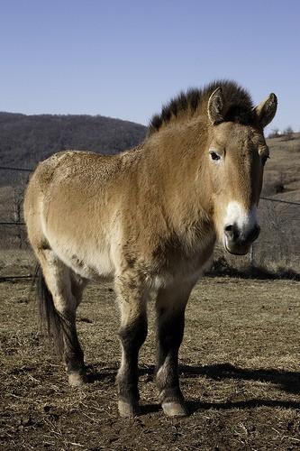 horse standing in field