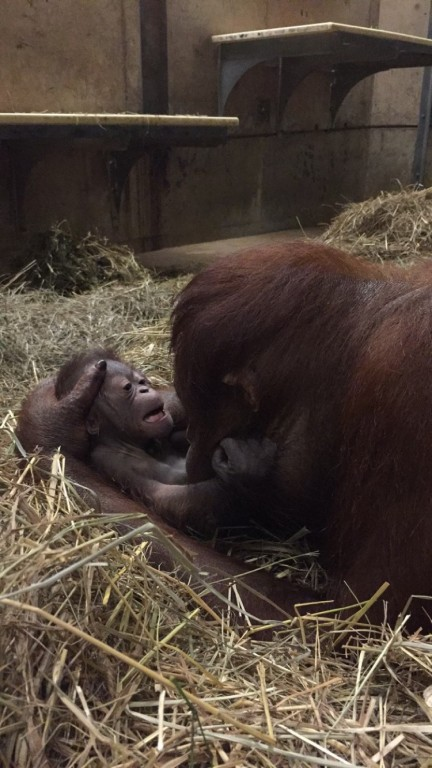 Batang and her infant male