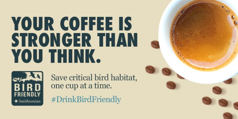 """Graphic text with a coffee cup and coffee beans: """"your coffee is stronger than you think. save critical bird habitat, one cup at a time. #DrinkBirdFriendly"""""""