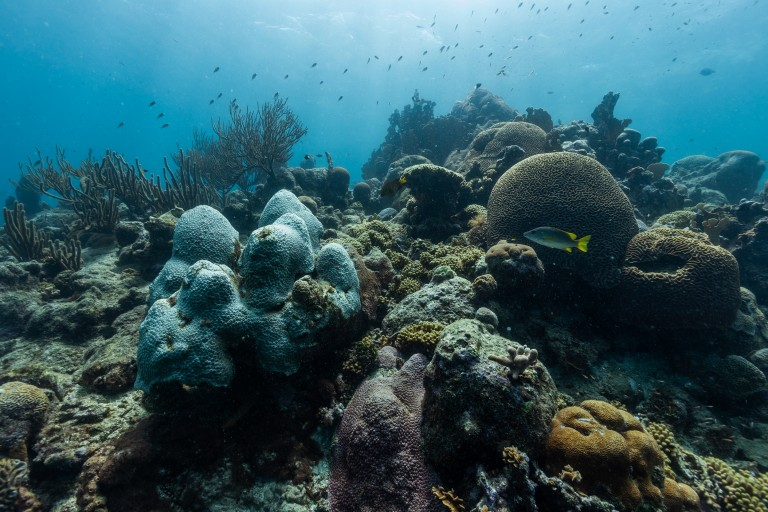 An underwater photo of a bustling coral full of various colorful species of coral and fish