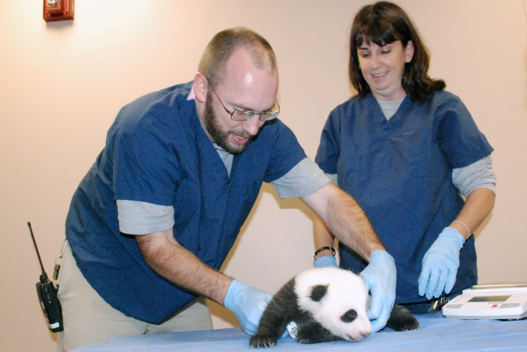 Keeper Marty Dearie, assistant curator Laurie Thompson and Bao Bao.