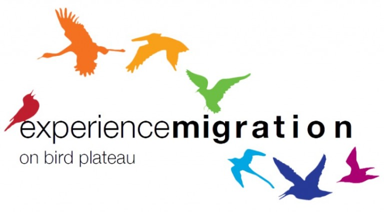 """A logo with colorful birds around the words """"experience migration"""""""