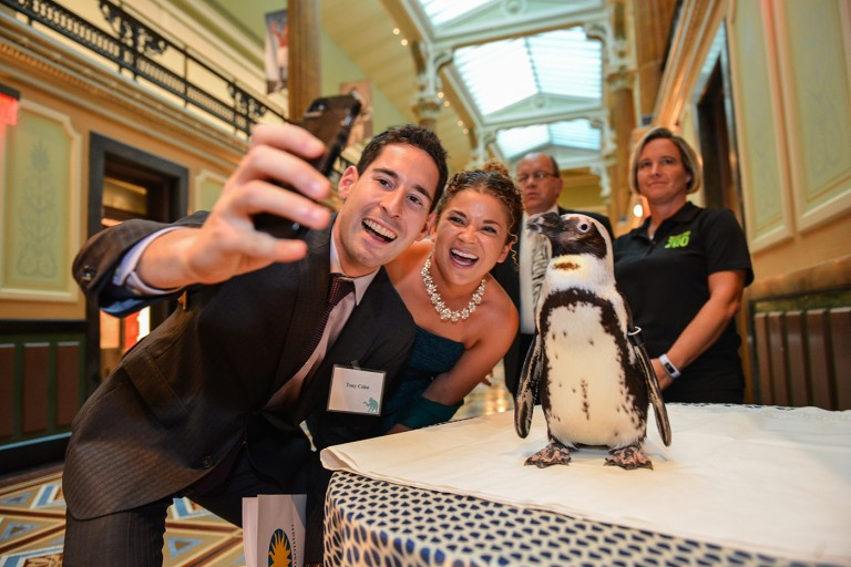A couple takes a selfie with a penguin at the Smithsonian's National Zoo's Monkey Business Gala