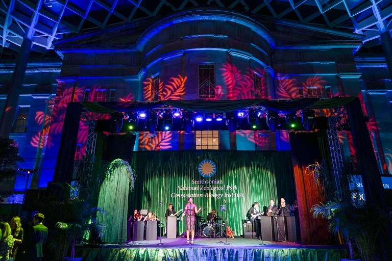 A band plays on a colorfully lit stage at the Smithsonian's National Zoo's Monkey Business Gala