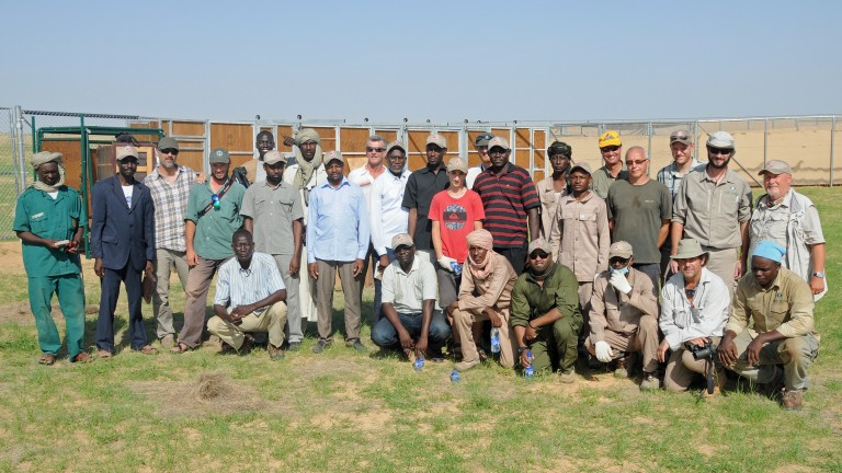 the oryx collaring team